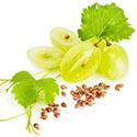 Pépins de raisins